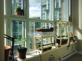 Grow Indoor Plant Garden