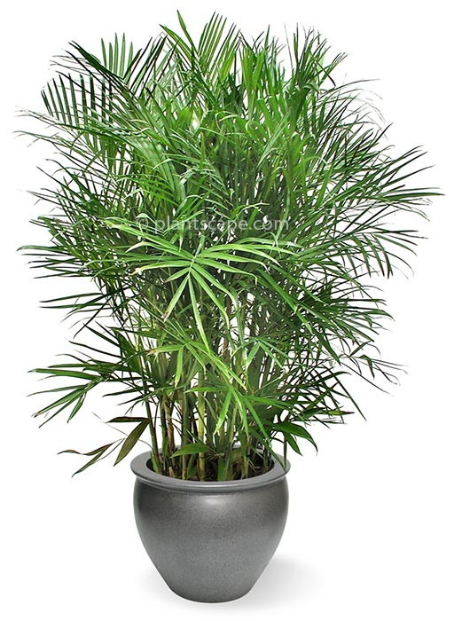 best-indoor-plants-to-purify-the-air-in-your-apartment-3