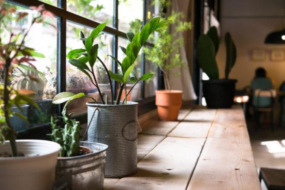 Indoor Home Gardening