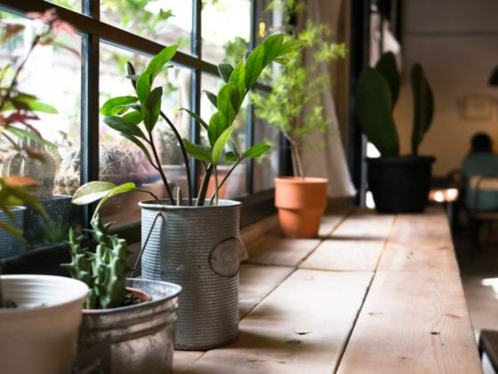 Indoor Home Gardening