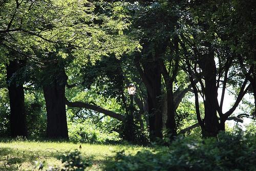 MacNeil-Park-Queens