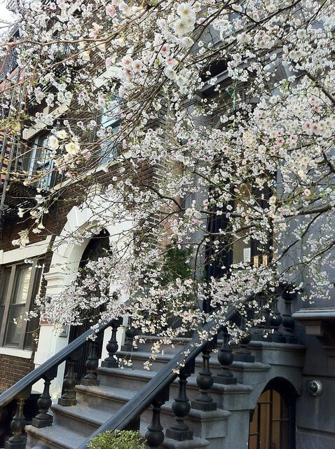 Neighborhood Spotlight: Boerum Hill